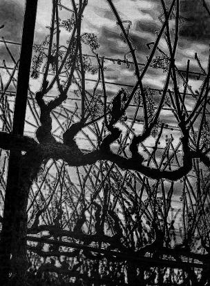 vine-tortured-3BW-XL